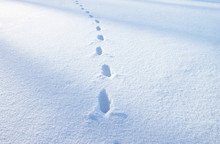 Footsteps In The Blue Snow