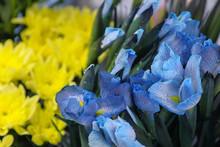 Floral Business Concept. Blue ...
