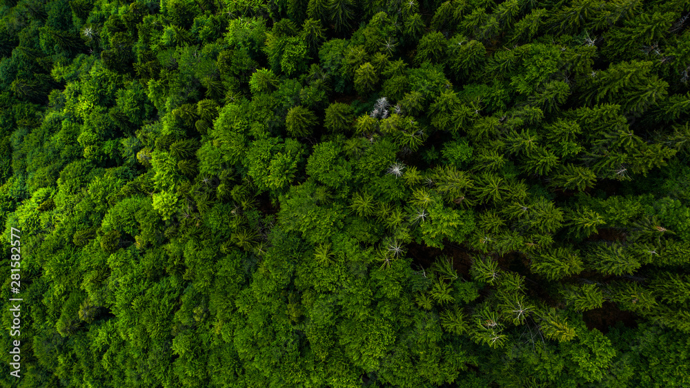 Fototapety, obrazy: Aerial view of mountains covered with coniferous forests