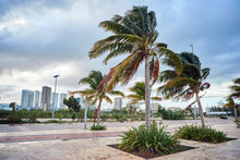 Cancun City Landscape With Palm Trees In Windy Weather. Mexica.
