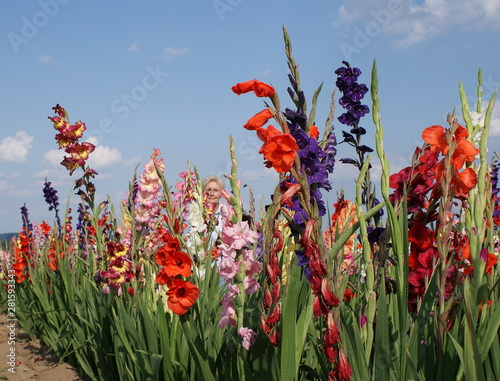 The gladioli in the many bright colors also inspire this young woman Billede på lærred