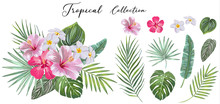 Hand Drawn Set Of Tropical Leaves And Flowers. Vector Design Concept