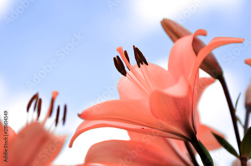 red-flower-on-blue-background