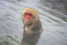 Snow Monkey Sitting In The Hot Spring Looking With Innocent Eyes And Relaxing In The Winter Time In Japan