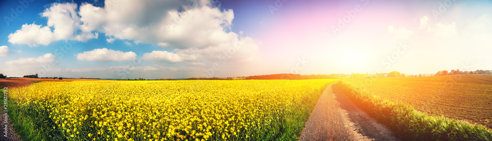 Fototapeta Panoramic summer landscape with rapeseed field
