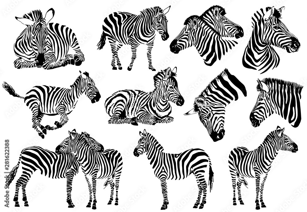 Fototapety, obrazy: Graphical collection of zebras, white background, vector tattoo illustration,eps10