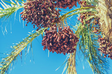 Date Palm Trees Against The Sky. Selective Focus.
