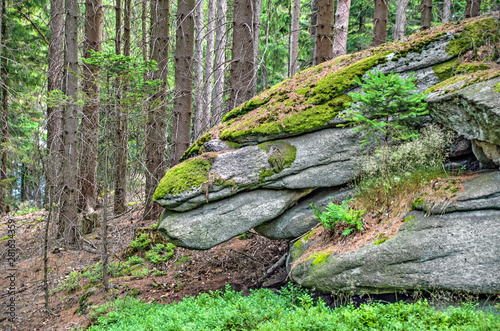 Fotografia rocks in the forest
