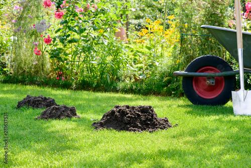 Fotomural Maulwurfshügel im Garten