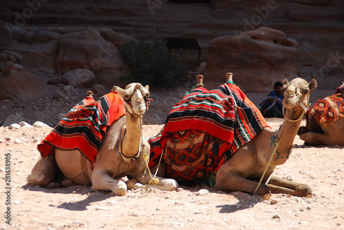 Photographie  Camels in the lost city of Patra, Jordan
