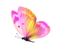 Multicolored Butterfly For Design. Isolated On White