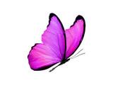 Fototapeta Motyle - multicolored butterfly for design. isolated on white