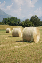 Dry Hay Bales In The Meadow. A...