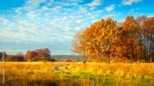 Spoed Fotobehang Weide, Moeras Autumn nature. October landscape on sunny bright day. Colorful trees on beautiful meadow in morning