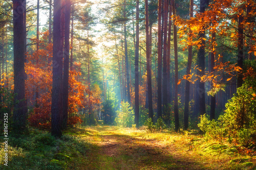 Foto op Plexiglas Bos Amazing autumn forest in morning sunlight. Red and yellow leaves on trees in woodland. Scenic landscape