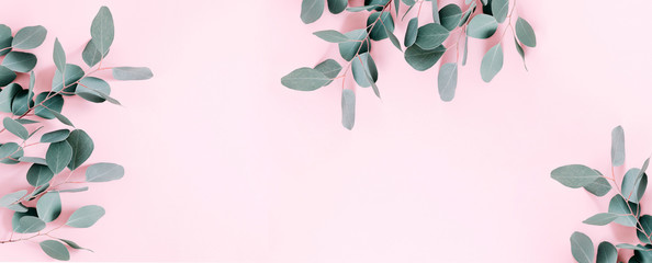 Eucalyptus leaves and branches on pastel pink background. Eucalyptus branches pattern. Flat lay, top view, copy space, banner