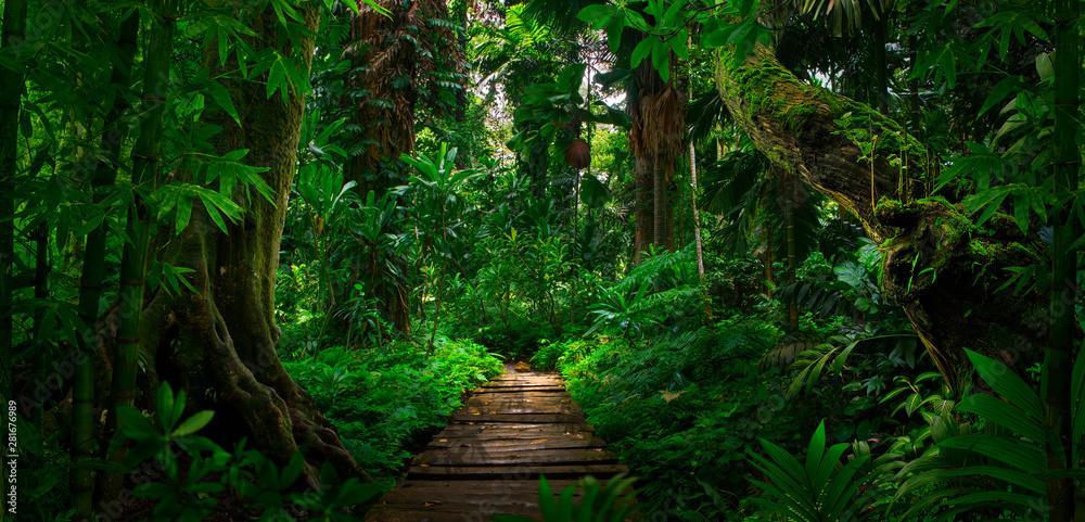 Fototapeta Southeast Asian tropical rainforest with path