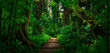 canvas print picture - Southeast Asian tropical rainforest with path