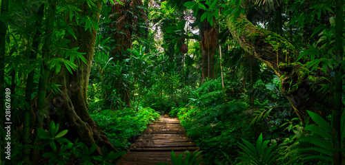 Obraz Southeast Asian tropical rainforest with path - fototapety do salonu