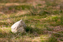 Limestone On Grass And Dried Pine Needles