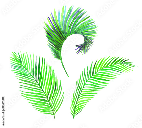 Photo Areca Palm leaves collection isolated on white hand painted watercolor illustrat