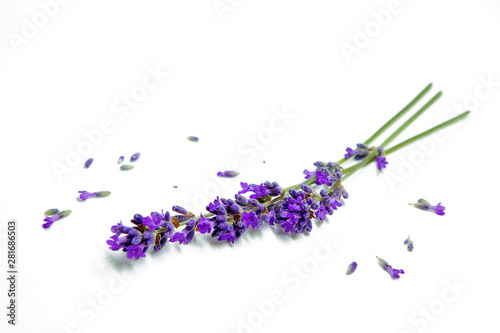Autocollant pour porte Lavande Flowers of lavander, background with flowers