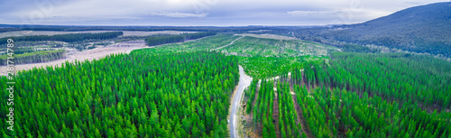 Aerial panorama of pine trees plantation in Melbourne, Australia Canvas Print