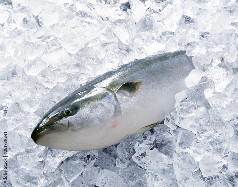 Fototapeta 氷漬けのブリ