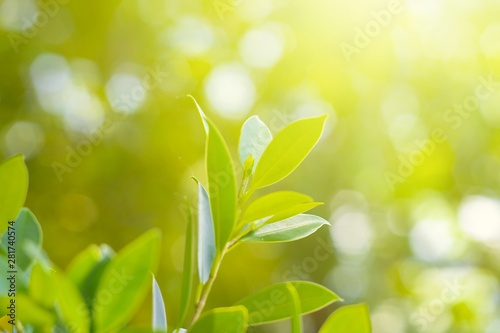 Foto auf AluDibond Pistazie Nature leaf green in the garden.Concept organic leaves green and clean ecology in summer sunlight plants landscape. bokeh blurred bright green use texture wallpaper natural background.selective focus