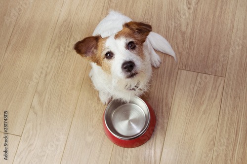 Hungry dog food with a red empty bowl. High angle view. - 281748115