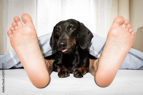 Photo sur Aluminium Chien de Crazy sleeping dog and owner in bed