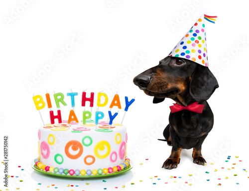 Photo sur Aluminium Chien de Crazy happy birthday dog