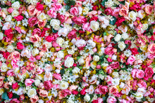 Peonies Flowers Background. Colorful Background. Many Flowers.