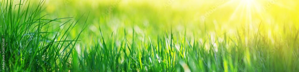 Fototapeta Fresh green grass background with sunlight