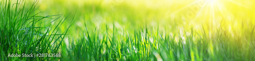 Fresh green grass background with sunlight - 281763568