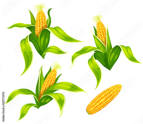Fotografia Set of maize corncobs with yellow corns ears and green leaves set, isolated on white transparent background