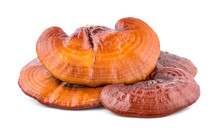 Dried Ganoderma Lucidum Mushro...