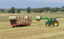 Summer Works In The Fields Of The Tuscan Countryside In The Province Of Pisa, Tuscany, Italy