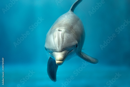 Spoed Foto op Canvas Dolfijn dolphin underwater looking at you