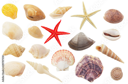 Photo  Assortment of seashells and starfishes  isolated on white background