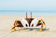 Crab On The Seashore In The Sand
