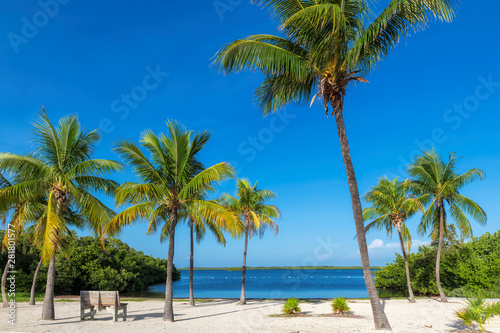 Foto auf Gartenposter Strand Coco palms on Sunny beach and Caribbean sea in Key, Largo, Florida.