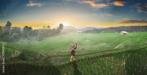 Foto auf AluDibond Olivgrun The hill tribe women in the landscape, mountains and fields have green trees at sunrise.
