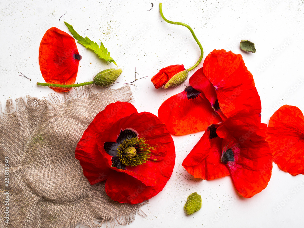 beautiful red poppy flower isolated on a white background