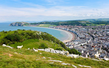 A Herd Of Great Orme Goats High Above Llandudno, Wales, GB, UK