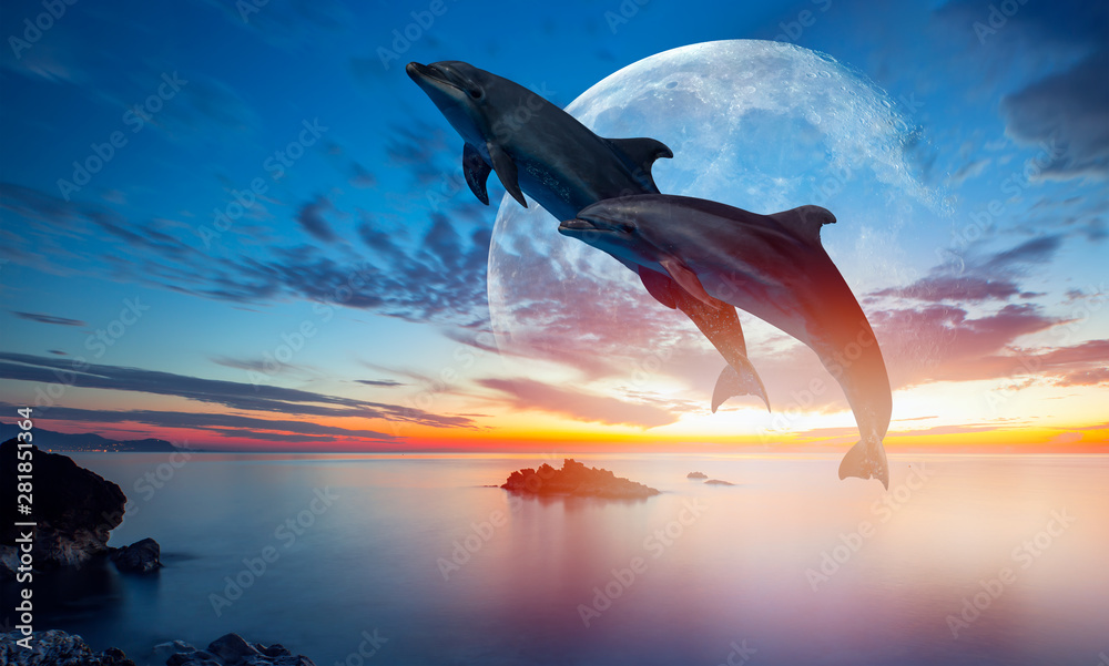 Fototapeta Silhoutte of beautiful dolphin jumping up from the sea at sunset with super moon