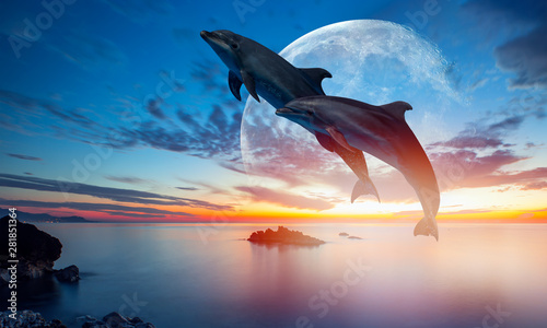 Poster Zee zonsondergang Silhoutte of beautiful dolphin jumping up from the sea at sunset with super moon
