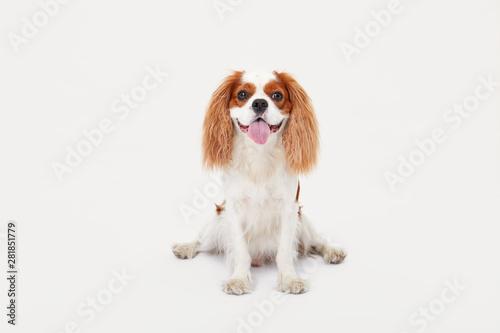 Fotografia, Obraz Smart dog