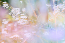 Abstract Defocused Nature Back...