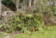 Heap Of Garden Waste After Tri...